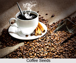 Coffee, Indian crop