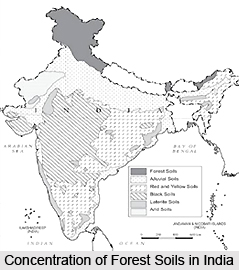 Forest Soils in India