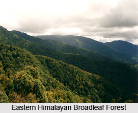Eastern Himalayan Broadleaf Forests in India