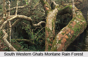 South Western Ghats Montane Rain Forests in India