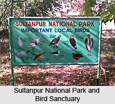 Sultanpur National Park and Bird Sanctuary, Haryana