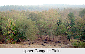 Upper Gangetic Plains Moist Deciduous Forests in India
