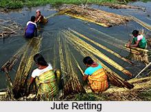Jute in India
