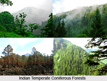 Indian Temperate Coniferous Forests