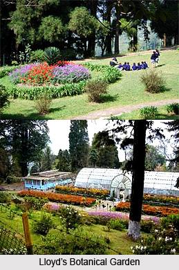 Lloyd's Botanical Garden, Tourist Places in Darjeeling, West Bengal