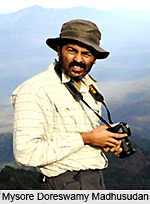 Mysore Doreswamy Madhusudan, Indian Conservationist