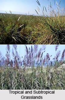 Tropical and Subtropical Grasslands, Savannas,  and Shrub-Lands in India