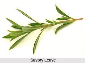 Savory
