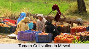 Mewat District, Haryana