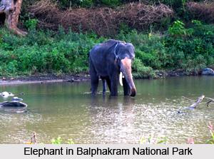 Balphakram National Park