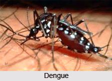 Dengue Fever or Dandak Jwara