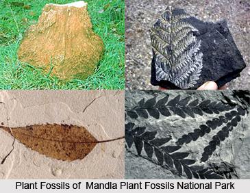 Mandla Plant Fossils National Park