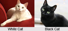 Omens Related to a Cat, Vastu Shastra