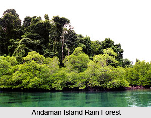 Andaman Islands Rain Forests