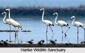 Harike Wildlife Sanctuary