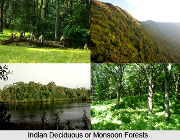 Indian Deciduous or Monsoon Forests