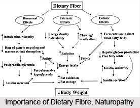 Importance of Dietary Fibre, Naturopathy