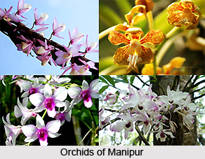 Flora and Fauna of Manipur