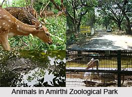 Amirthi Zoological Park, Tamil Nadu