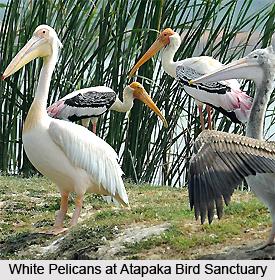 Atapaka Bird Sanctuary, Andhra Pradesh