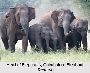 Coimbatore Elephant Reserve, Tamil Nadu