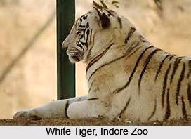 Indore Zoo, Madhya Pradesh
