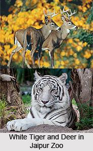 Jaipur Zoo, Rajasthan