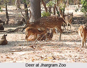Jhargram Zoo, West Bengal