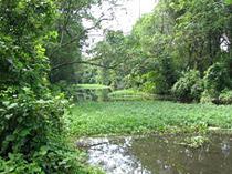 Kerala -Flora And Fauna