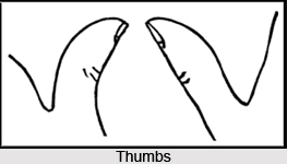 Types of Thumbs, Palmistry