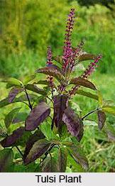 Natural Remedy for Malaria, Naturopathy