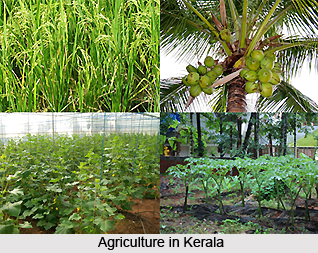 Agriculture in Kerala