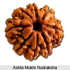 Ashta Mukhi Rudraksha