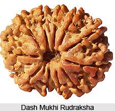 Dash Mukhi Rudraksha