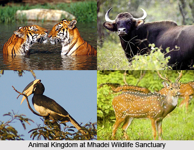 Mhadei Wildlife Sanctuary, North Goa District, Goa