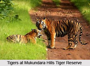 Mukundara Hills Tiger Reserve, Kota, Rajasthan