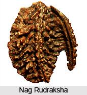 Nag Rudraksha