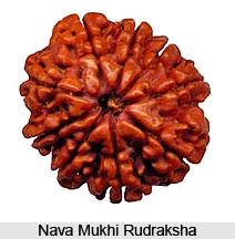 Nava Mukhi Rudraksha
