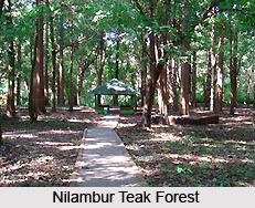Nilambur Teak Plantation, Malappuram District, Kerala