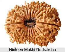 Ninteen Mukhi Rudraksha