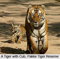 Pakui Wildlife Sanctuary, East Kameng District, Arunachal Pradesh
