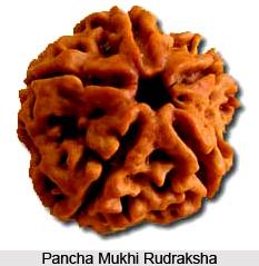 Pancha Mukhi Rudraksha