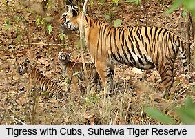 Suhelwa Tiger Reserve, Uttar Pradesh