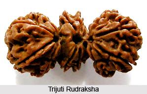 Trijuti Rudraksha