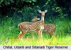 Udanti and Sitanadi Tiger Reserve, Dhamatari, Chhattisgarh