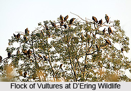 D'Ering Wildlife Sanctuary, East Siang District, Arunachal Pradesh