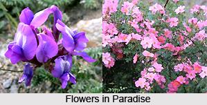 Flora and Fauna of Ladakh