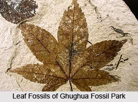 Ghughua Fossil Park