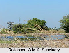 Rollapadu Wildlife Sanctuary, Kurnool District, Andhra Pradesh