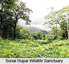 Sonai Rupai Wildlife Sanctuary, Sonitpur District, Assam